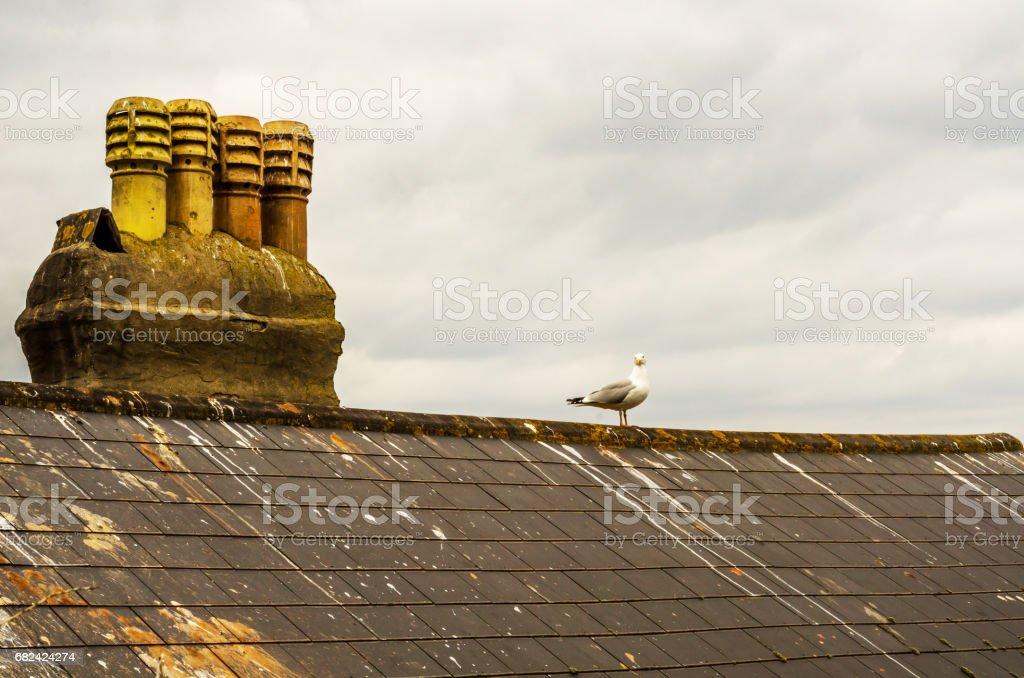 Oiseau posé sur la cheminée et le toit du bâtiment recouvert de mousse verte, place de bord de mer à partir de la vue plongeante photo libre de droits