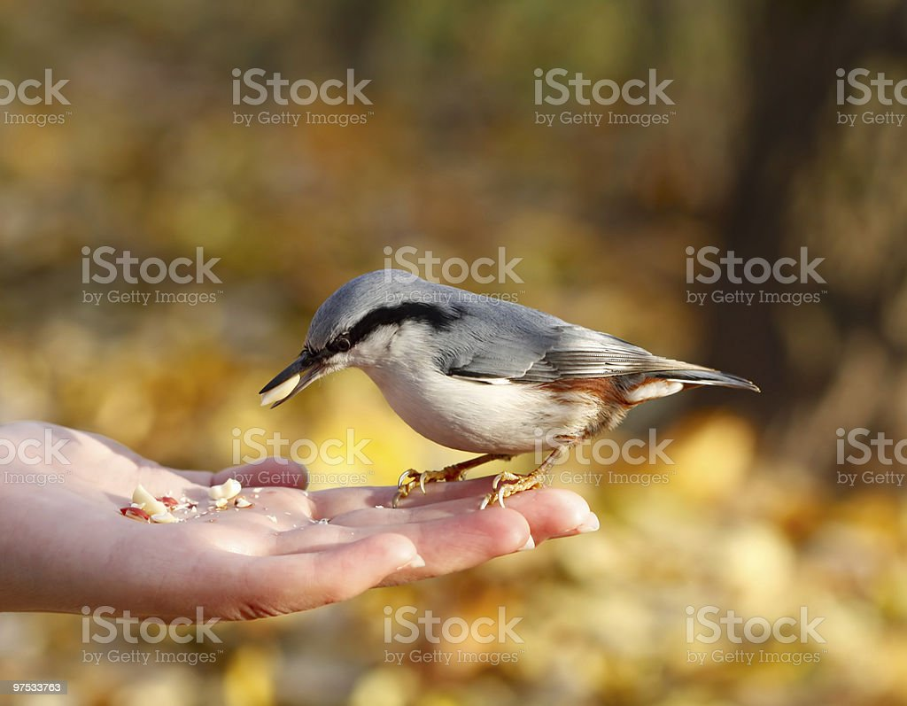 bird on the hand royalty-free stock photo