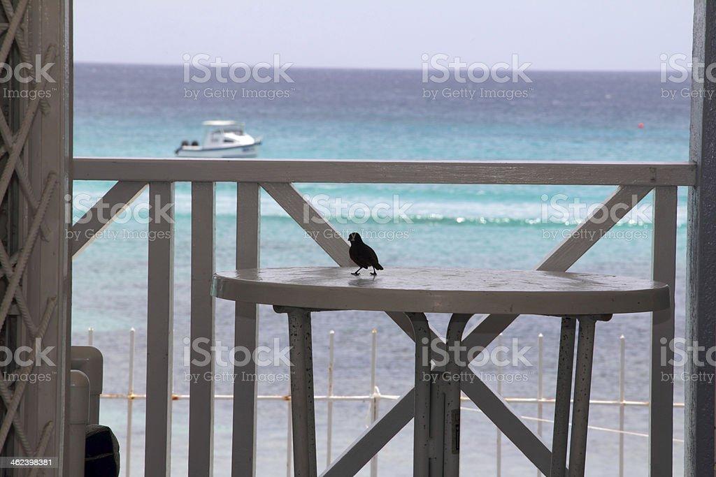 bird on the table stock photo