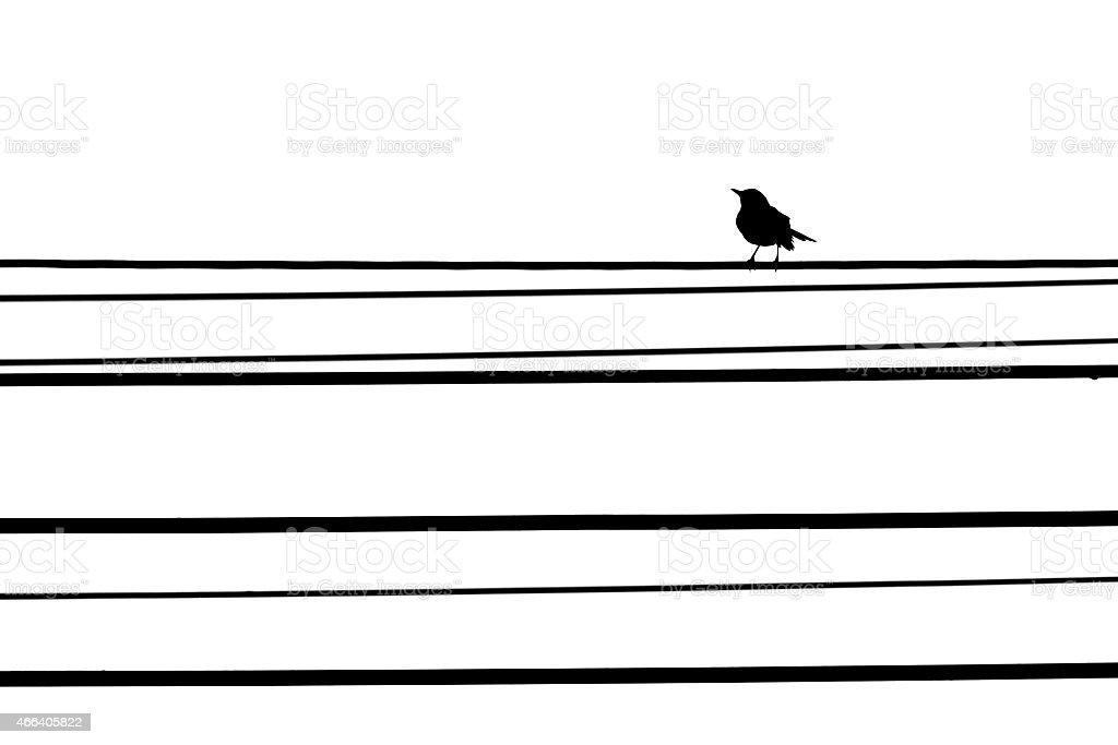 Vogel Auf Der Telefonleitung Isoliert Weißer Hintergrund Stock ...