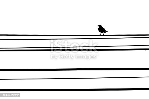 istock Bird on the telephone line isolated white background 466405822