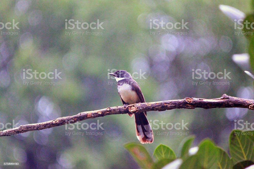 ฺBird on the Tree stock photo