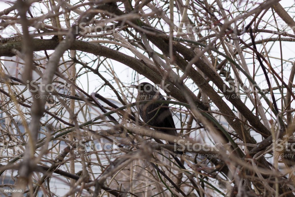 Bird on the tree. royalty-free stock photo