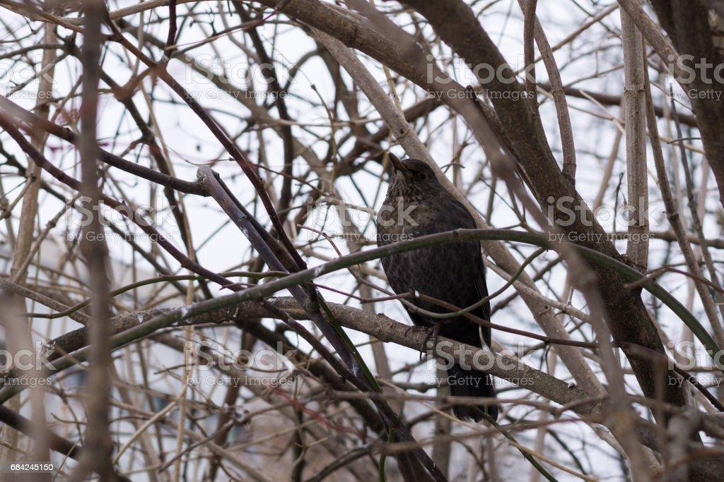 Bird on the tree. photo libre de droits