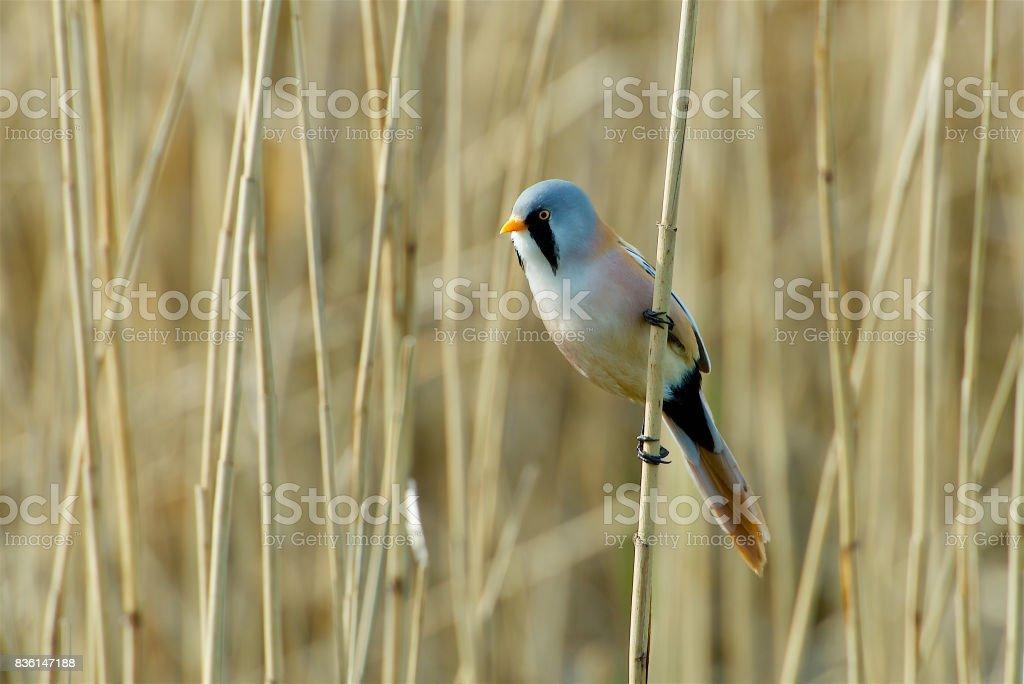 Bird on the west coast in Sweden stock photo