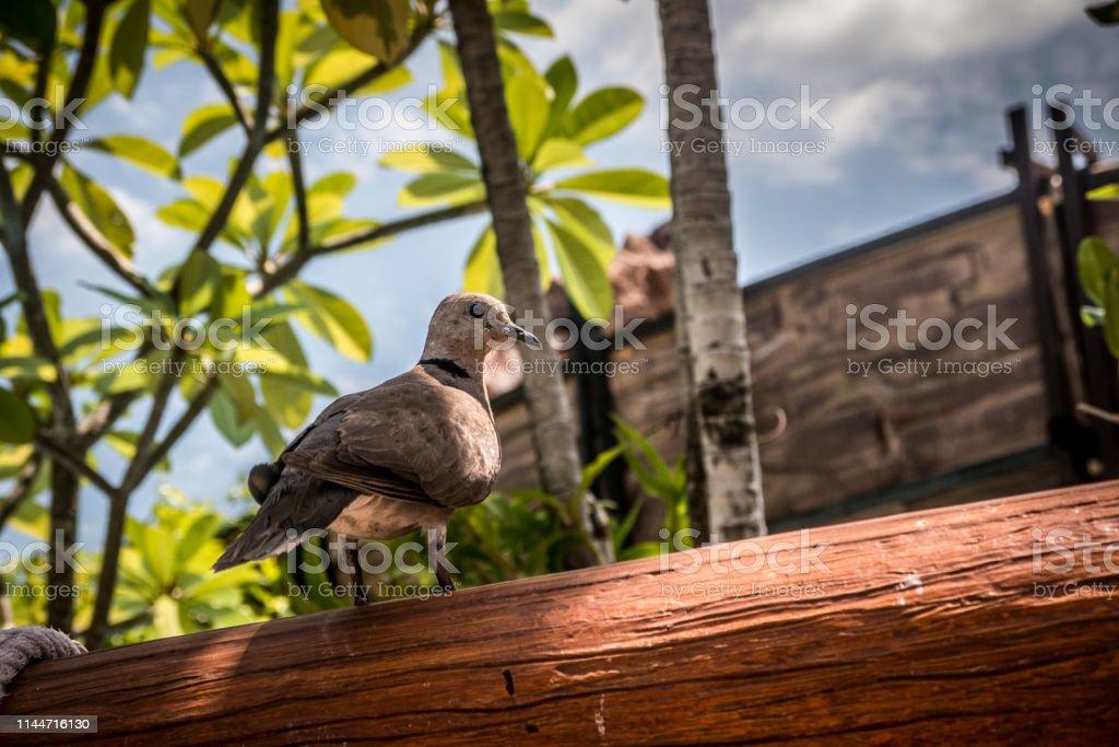 Bird on timber