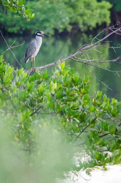 Bird on Tree stock photo