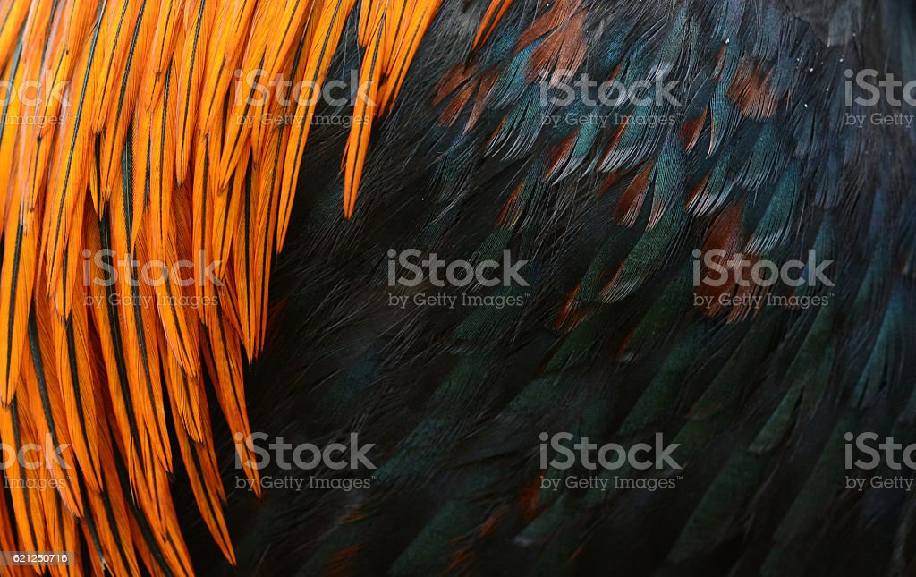 bird or chicken feather background stock photo
