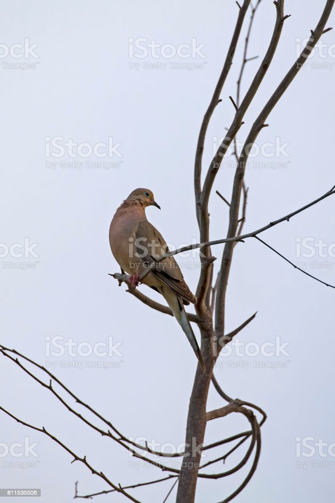 Bird overlooking golf course from trre branch perch stock photo