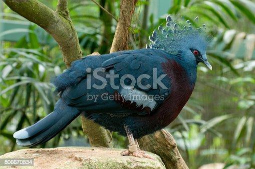 1153034372istockphoto Bird Park 806670834