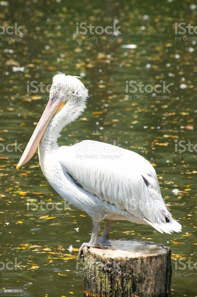 Bird Park stock photo