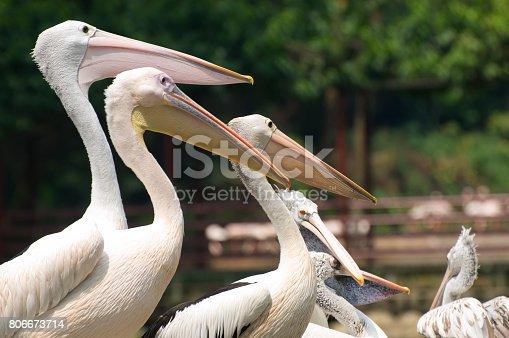 1153034372istockphoto Bird Park 806673714