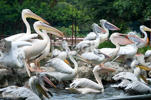 1153034372istockphoto Bird Park 806694708