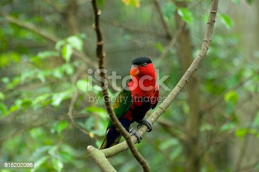 1153034372istockphoto Bird Park 815202098