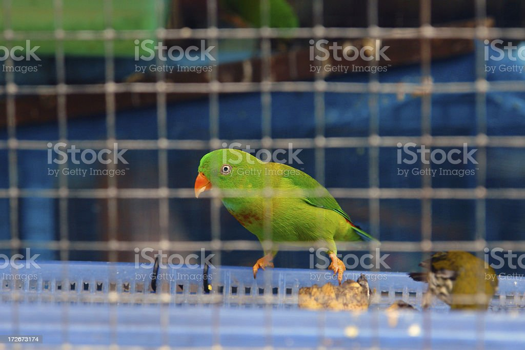 Bird / Parrot in a Cage Prison royalty-free stock photo