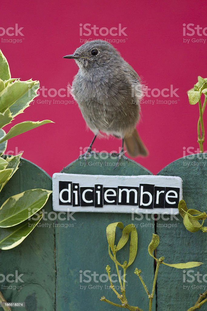 Bird perched on a December decorated fence royalty-free stock photo