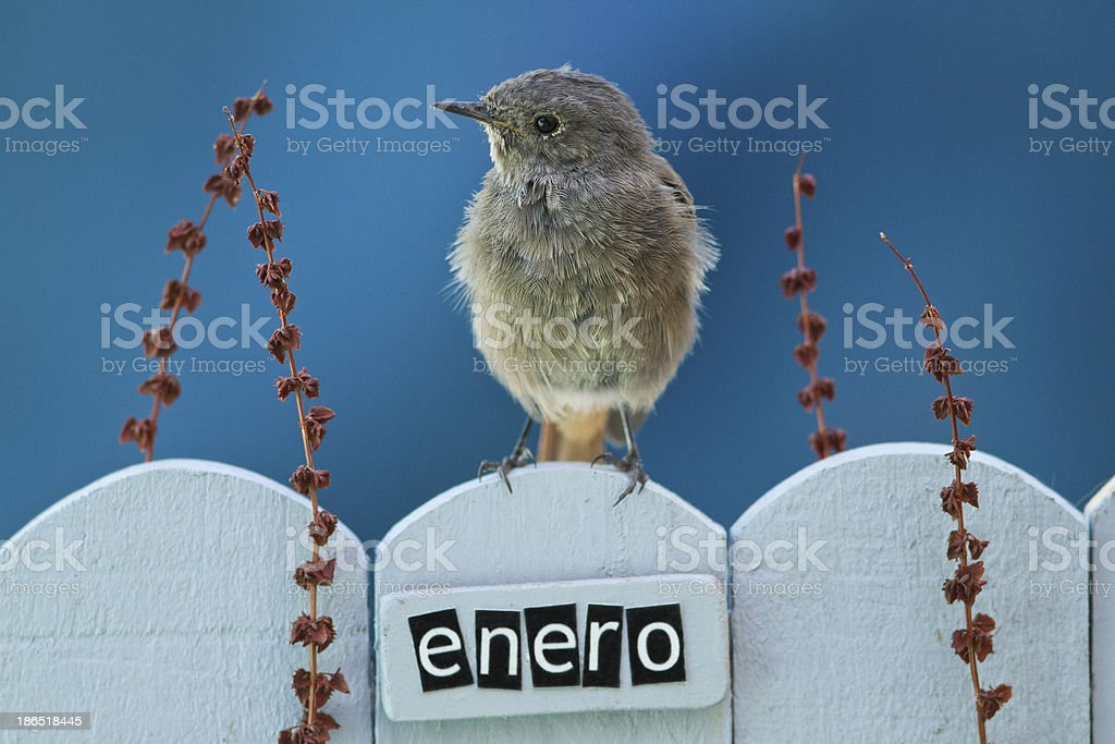 Bird perched on a January decorated fence royalty-free stock photo