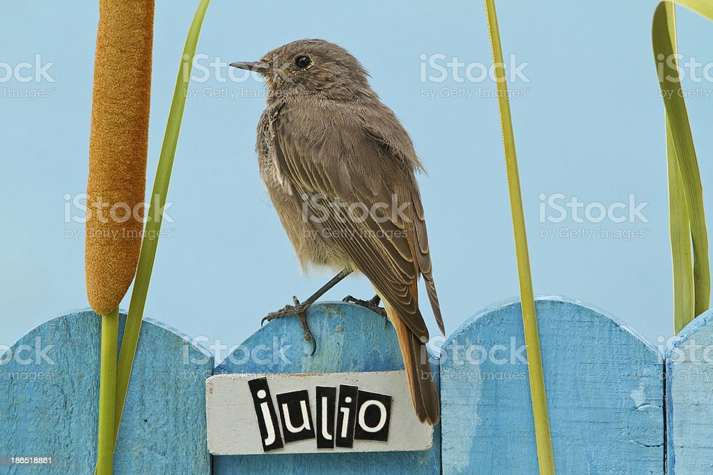 Bird perched on a July decorated fence royalty-free stock photo