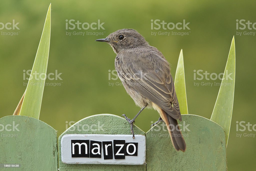 Bird perched on a March decorated fence royalty-free stock photo