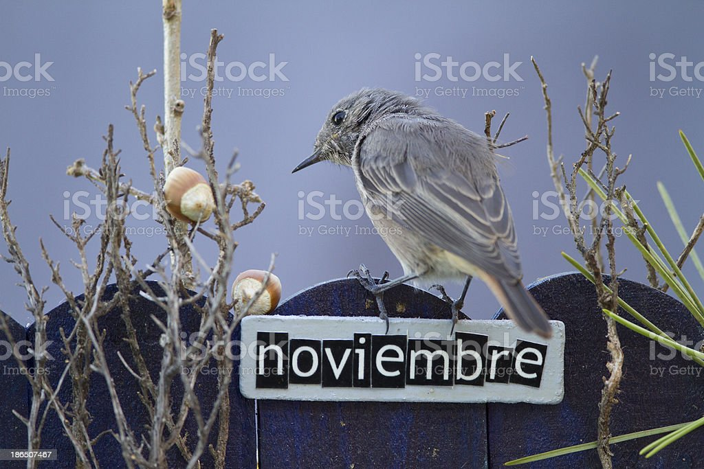 Bird perched on a November decorated fence royalty-free stock photo