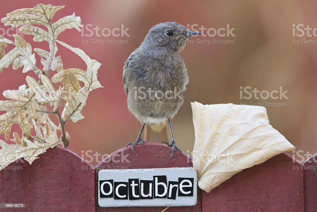 Bird perched on a October decorated fence royalty-free stock photo