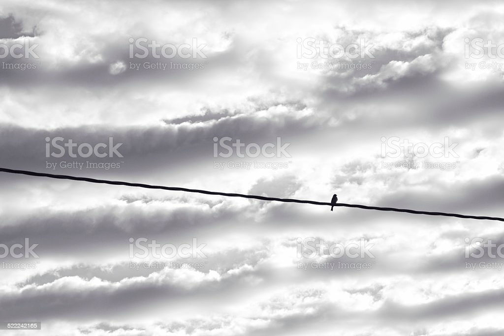 Bird Perched on an Electrical Power Line stock photo
