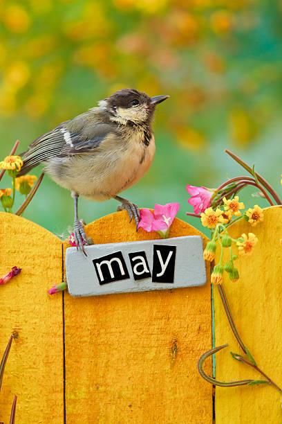 vogel thront auf einem können die nachbarn - sprüche kalender stock-fotos und bilder