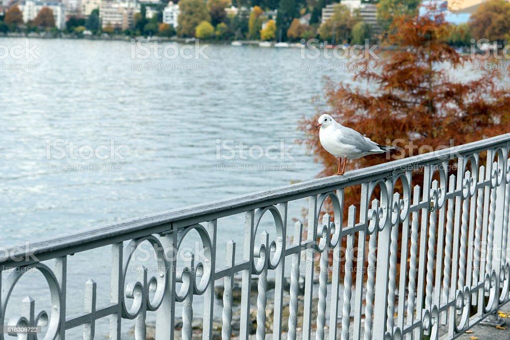 Vogel Auf Dem Geländer Des Genfer Sees Montreux Schweiz Stockfoto