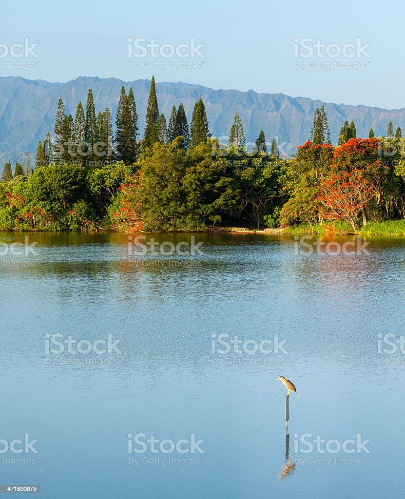 Bird perching on sign in calm lake by Na Pali royalty-free stock photo