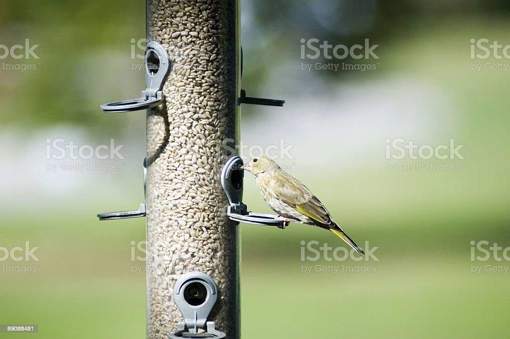 Bird royalty-free stock photo