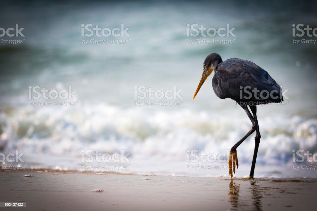 Oiseau  - Photo de Aigrette libre de droits