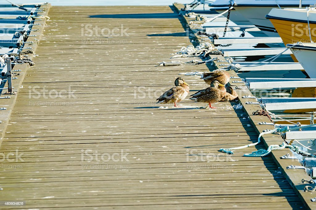 Bird poop on jetty stock photo