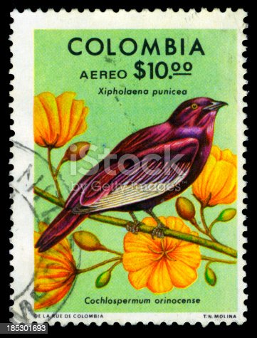 Xipholena punicea bird and cochlospermum orinocense flower on a postage stamp.Colombia