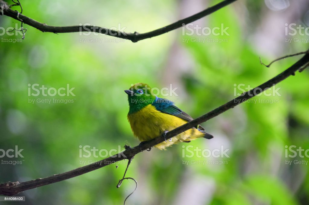 A bird resting on a branch at the Iguazu waterfalls, Brazil, South america, South America stock photo