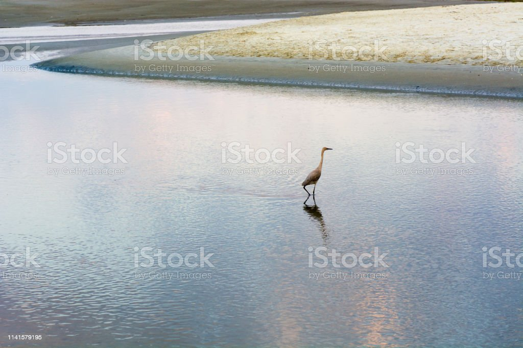 A bird searches for food stock photo