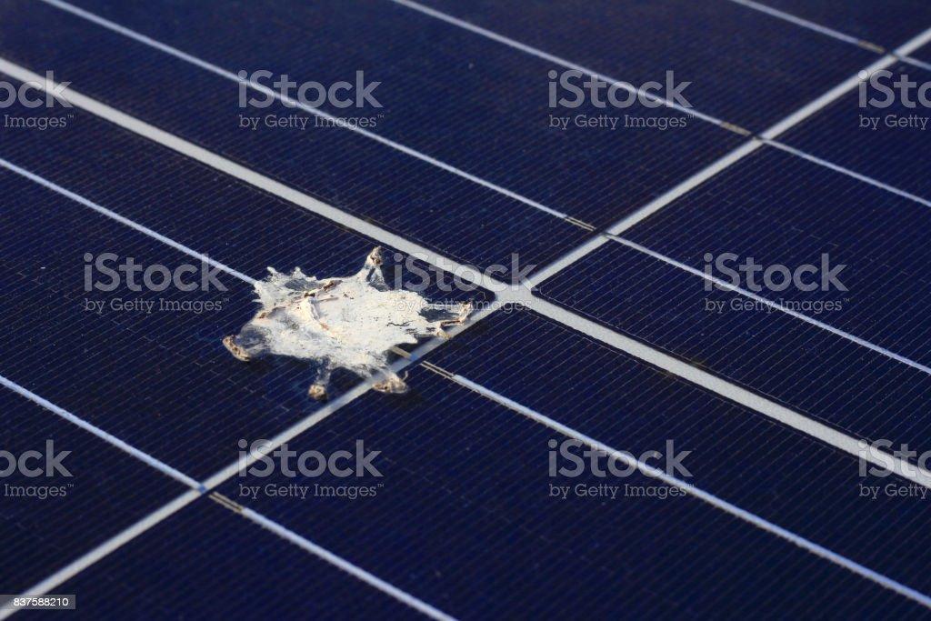 Bird Shit on Solar Panel Surface stock photo