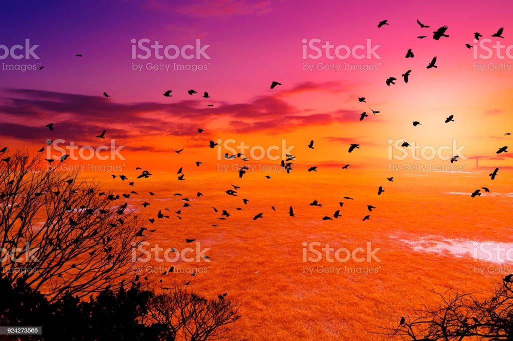 bird silhouette fly on beautiful sky stock photo