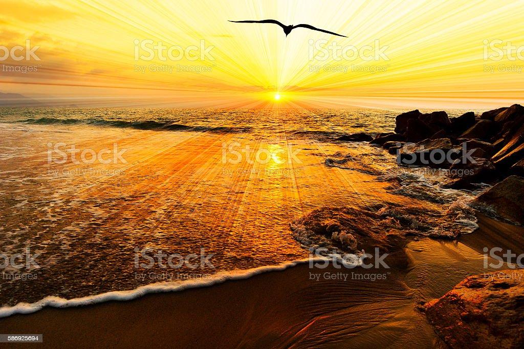 Bird Silhouette Ocean Sunset – Foto