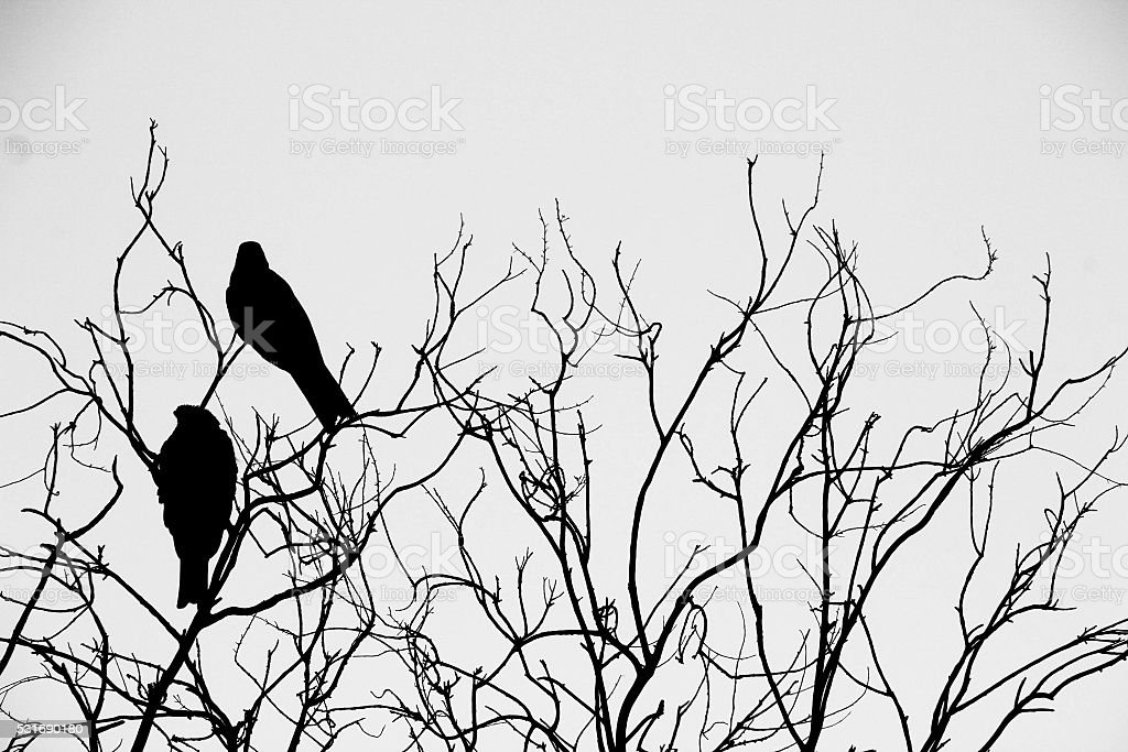 Bird Silhouette stock photo
