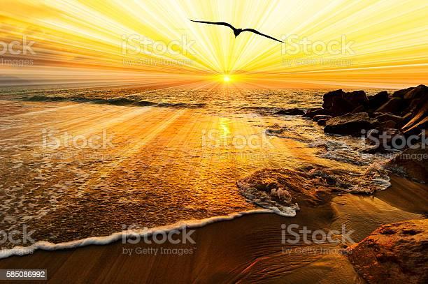 Bird silhouette sunset picture id585086992?b=1&k=6&m=585086992&s=612x612&h=to9yosei5tuskdhscy2hfz4cr0dz5agtkdy1wo997nc=