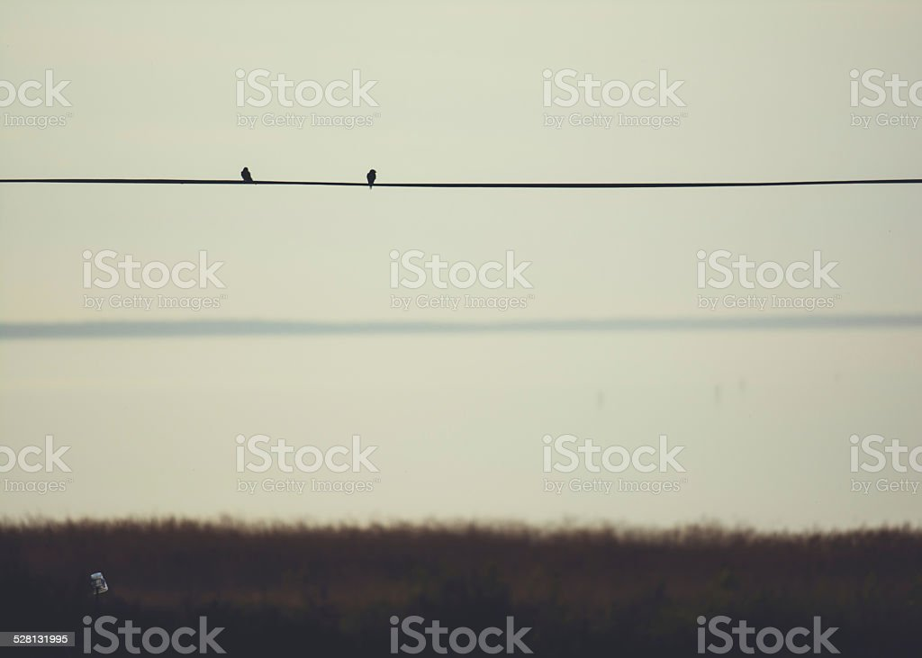 Bird silhouettes on a telefon cable royalty-free stock photo