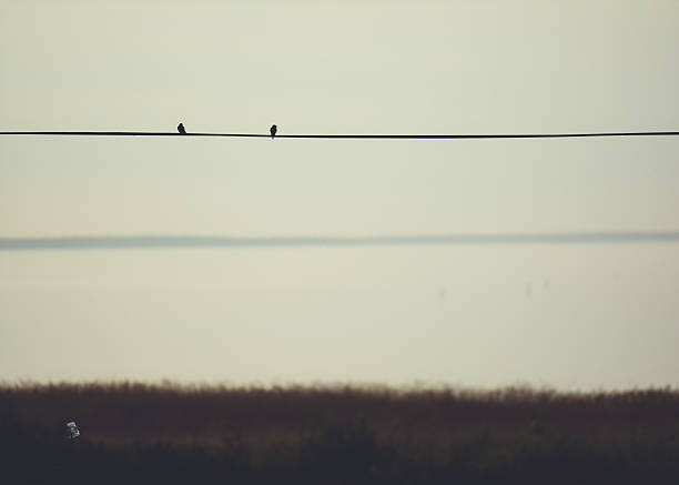 Bird silhouettes on a telefon cable stock photo