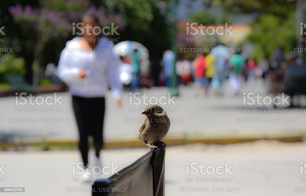Bird sitting on a chair stock photo