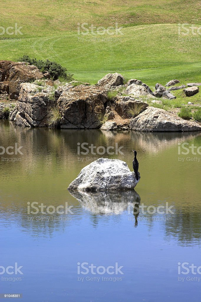Bird sitting on the lake. royalty-free stock photo