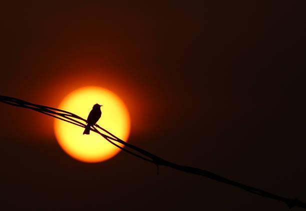 Oiseau assis sur fil de fer au coucher du soleil - Photo