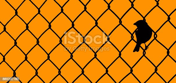 A bird sitting within a chain link fence. I think this could be great metaphor for a whole lot of things