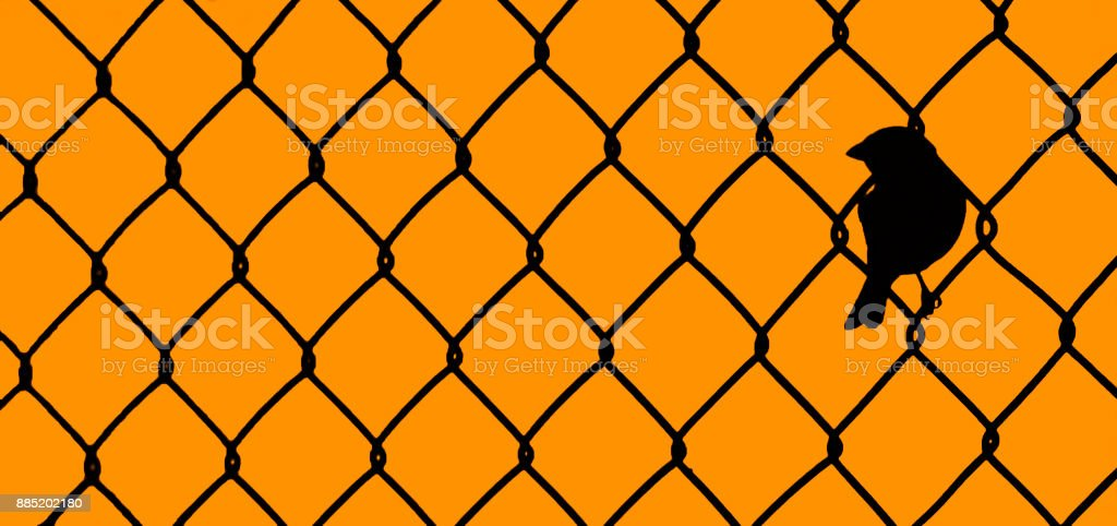 Bird Sitting within Chain link fence stock photo