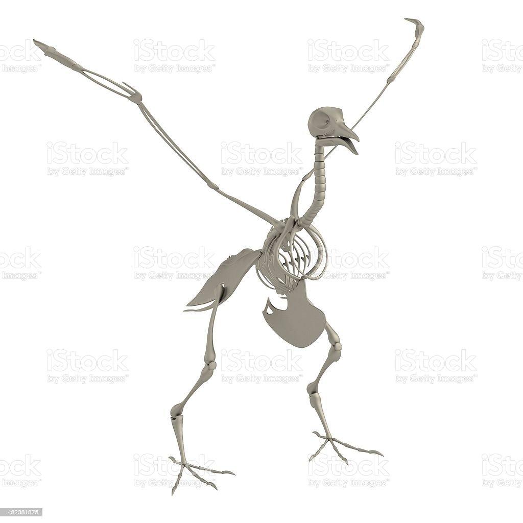 Bird Skeleton Stock Photo More Pictures Of Anatomy Istock