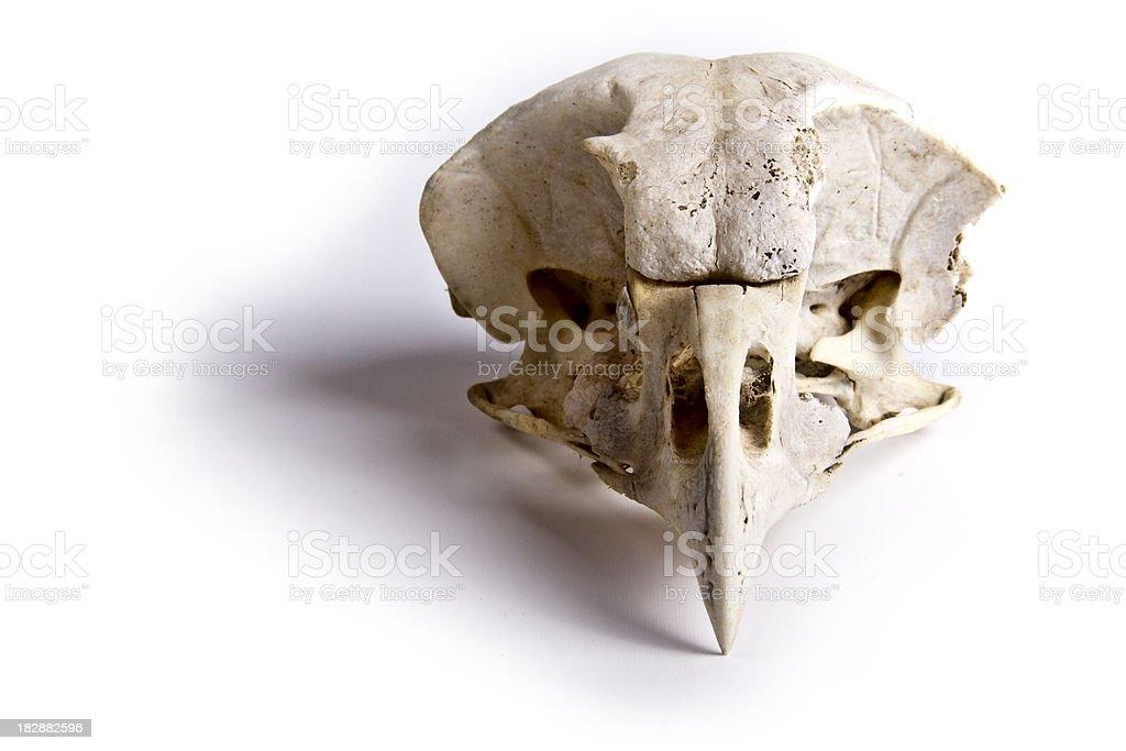 Bird Skull royalty-free stock photo