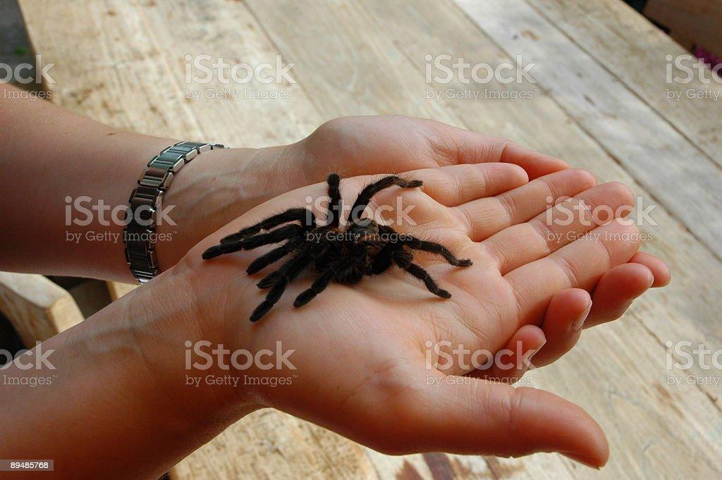 Bird spider skin on hand stock photo